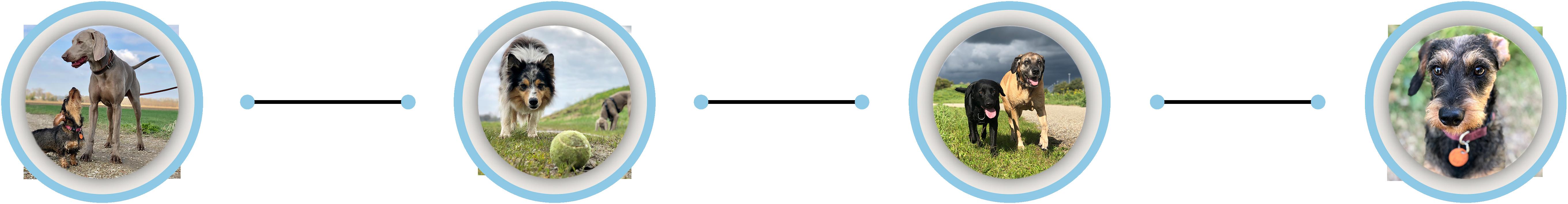 Schippers Hondenservice highlights