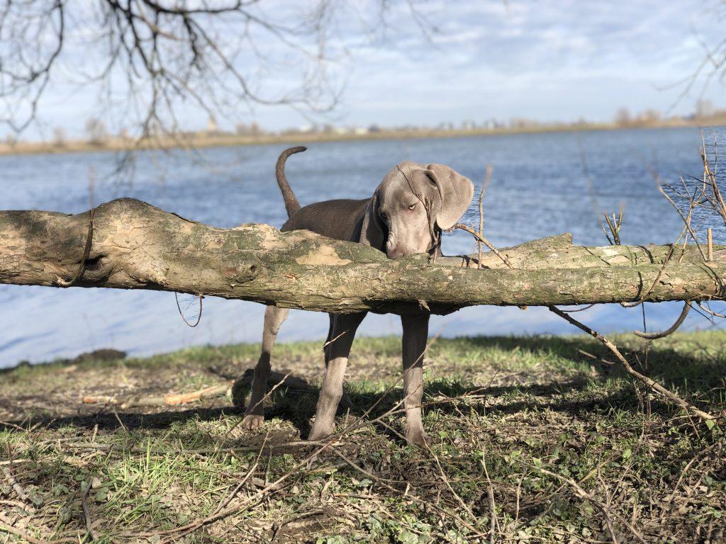 Puppy bijten- en waarom ruilen?