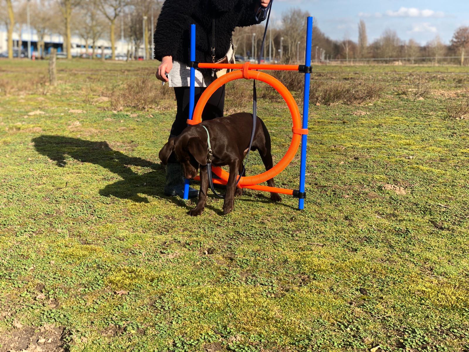 Hond: Pip
