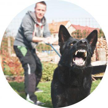 schippershondenservice-Coaching-hondengedrag
